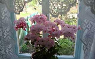 Домашние растения с приятным запахом: список